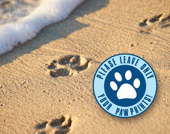 dog beach paw prints