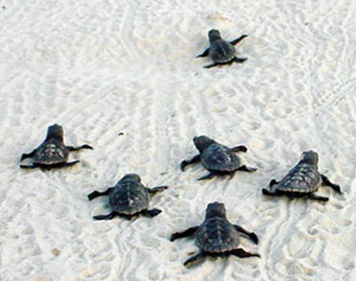 Sea Turtles Blog Photo #1
